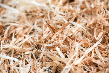 A lot of wood shavings in forest Stock Photo