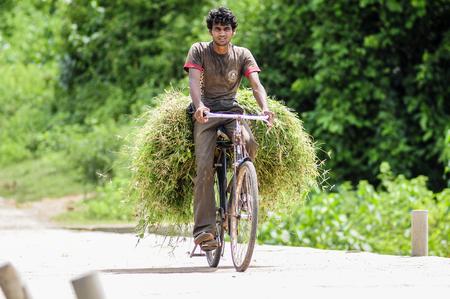 Khajuraho, India, september 17, 2010: Young man transporting on his bicycle plants. Editorial