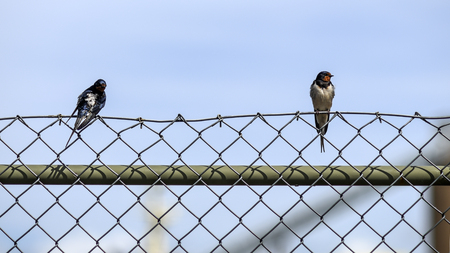 Wild birds sitting on a fence against the blue sky.