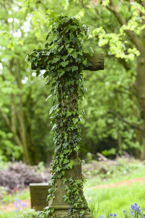 An old cross-pored plant at a cemetery in England.