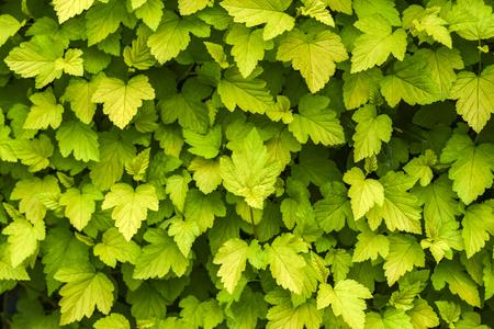 Textura fresh green leaves. Banco de Imagens