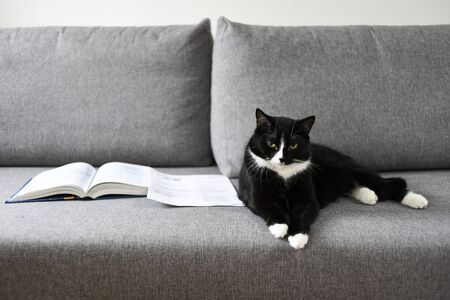 Cat lying on the sofa next to books.