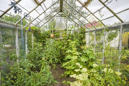 Greenhouse in a home garden.