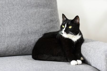 Black-and-white cat on the sofa at home.