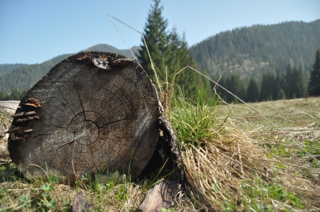 Rotten stump in a clearing in the mountains  Low Tatras, Slovakia photo