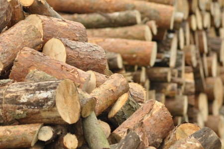 sourcing: Firewood, preparations for the winter