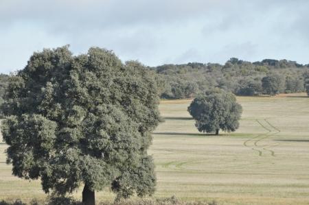 Einbuchtung: Eine Landstra�e zwischen den B�umen Spuren der im Gras zerknittertes Fahrzeug