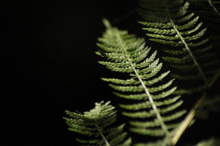 helechos: Las hojas de los helechos destacaron el sol. La vegetaci�n forestal.