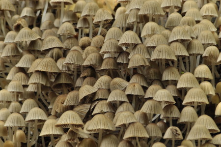 fruiting: Mushrooms in the forest. Mushrooming. Autumn. Edible and poisonous mushrooms. The fruiting bodies produce spores. Stock Photo