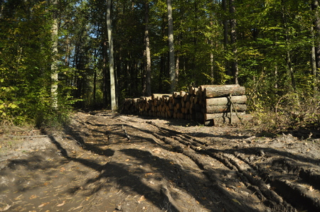 felling: Felling of trees and storage before shipment. Wood cut into pieces. Stock Photo