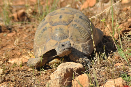 gad: Turtle on the rocky and sandy desert. Gad Soaking up the sun.