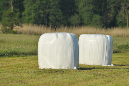 haymaking: Bales of hay lying on the meadow during haymaking. River Valley surrounded by meadows