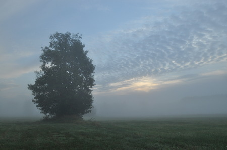 variable: Trees in the fog. Variable weather. Swit meadow. Morning with dew