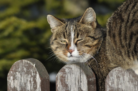 individualist: Cat sitting on the fence. Hunting for the mouse and rest