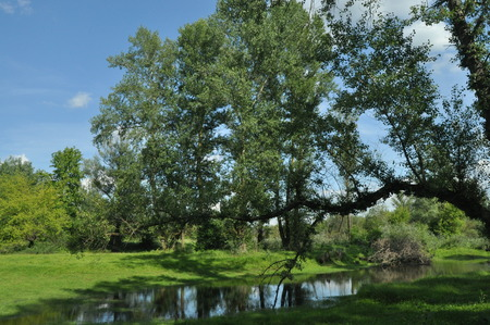 oxbow: Wet meadow and riparian forest oxbow lake. Vistula Valley. Spring, freshness and juiciness