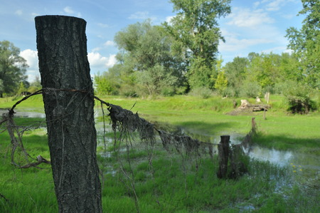 riparian: Wet meadow and riparian forest oxbow lake. Vistula Valley. Spring, freshness and juiciness