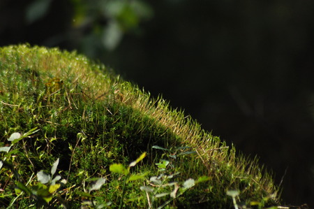 molehill: Moss covered tree limb seedlings and young plants. Rays of light reaching the fleece.