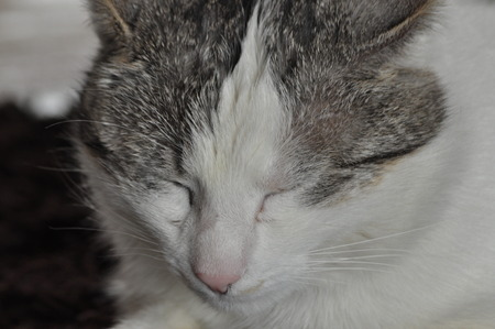 individualist: The sleeping and purring cat. Pet. Rest and relaxation.