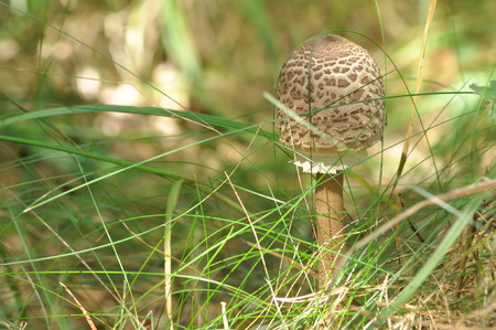 mushroom picking: Edible mushrooms. Delicacy. The addition to the dishes. Autumn mushroom picking