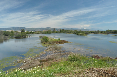 marshes: Marshes, wetlands on the coast of M�laga Stock Photo