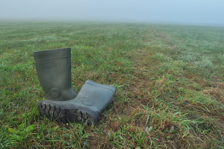 rain boots: Rain boots, rubber boots standing on a wet meadow. Fog in the morning