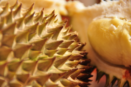 Durian in spiky shell. Java in Indonesia.