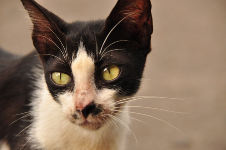 whiskers: Portrait of a cat. Wild eyes and long whiskers. Stock Photo