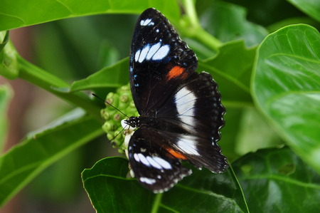 dreamlike: Colored tropical butterfly. Java in Indonesia. Stock Photo