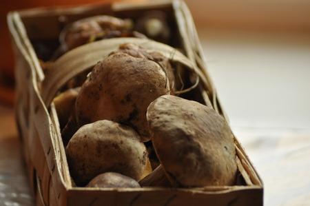 mushrooming: Boletus. Edible mushrooms lying in a basket, Lubyanka. Mushrooming.