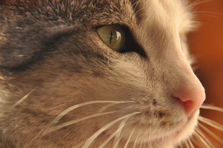 Portrait of a cat. Wild eyes and long whiskers. Stock Photo