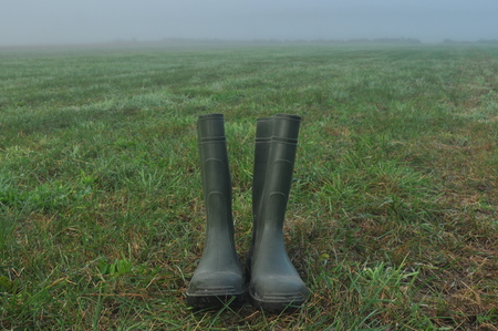botas de lluvia: Rain boots, rubber boots standing on a wet meadow. Fog in the morning