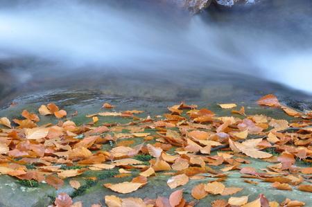 Source Vistula. Crystalline stream, clean water and waterfall