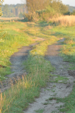 A country road through wet meadows. Sunny morning in the swamp. Sunrise.