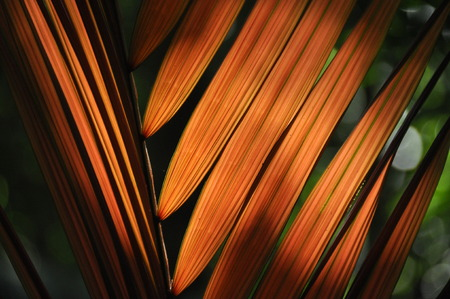 Leaves of tropical plants, palms in the sunshine at the bottom of a forest in the jungle.