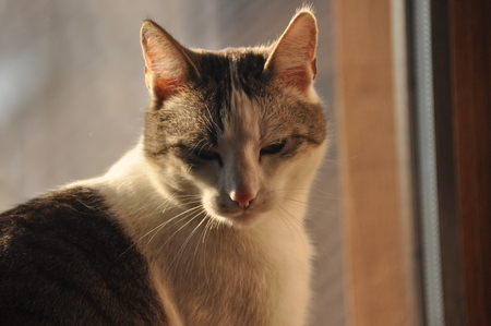 Portrait of a cat. Wild eyes and long whiskers. 免版税图像