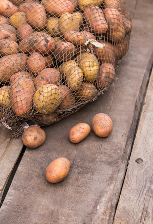 bulbous: Fresh harvested potatoes with soil still on skin, spilling out of a burlap bag, on a rough wooden palette. Stock Photo