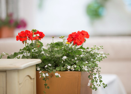 Flower in basket decorated near house, cafe photo