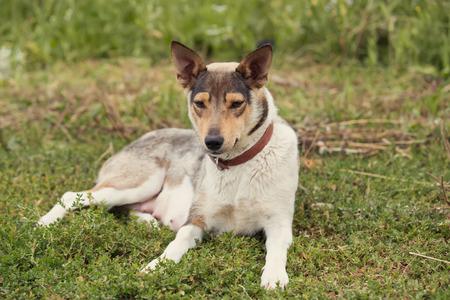 purebred: purebred dog seat on grass