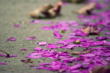 Fallen flower petals on a sidewalk.