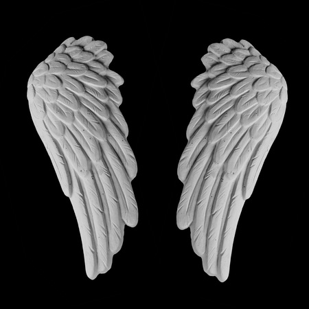 white plaster wing on a black background