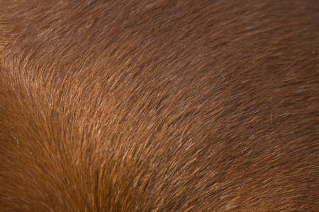 The texture of the skin and wool of a pig, horse, cow, sheep. Background for design.