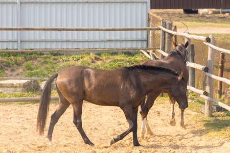 Horses grazing in a ranch pen