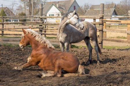 Horse grazing in a ranch pen Фото со стока