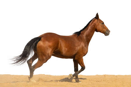Horse jumps on sand on a white background