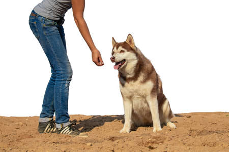 Young woman canine train dog breed Husky