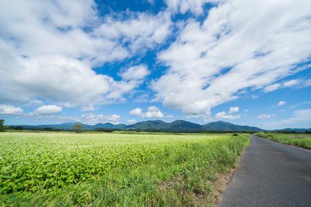 Soba Flower and Hiruzen (Hiruzen area, Maniwa City, Okayama Prefecture)