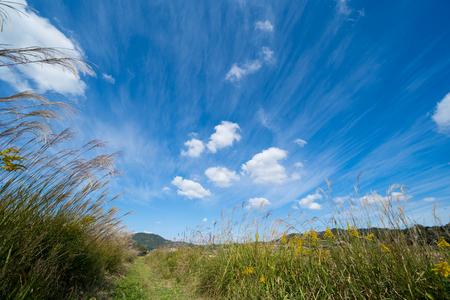 Susuki Grass.autumn Sky