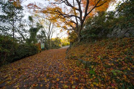 Autumn leaves. Promenade of Yashima (Takamatsu City, Kagawa Prefecture)