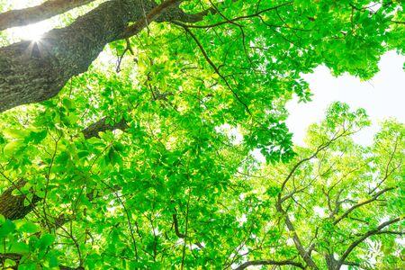 Fresh green. Sunbeams