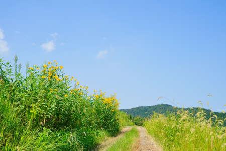 Summer road(Kagawa Prefecture)